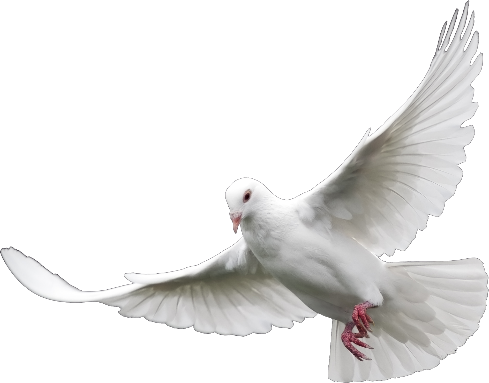 white dove png dove clip art christian dove clipart black and white